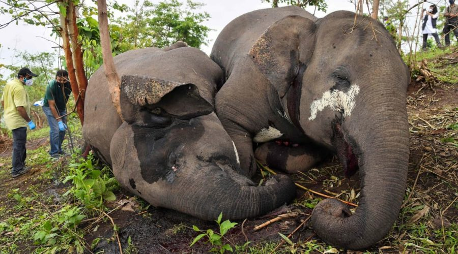Lightning may have killed 18 wild elephants in India, officials say