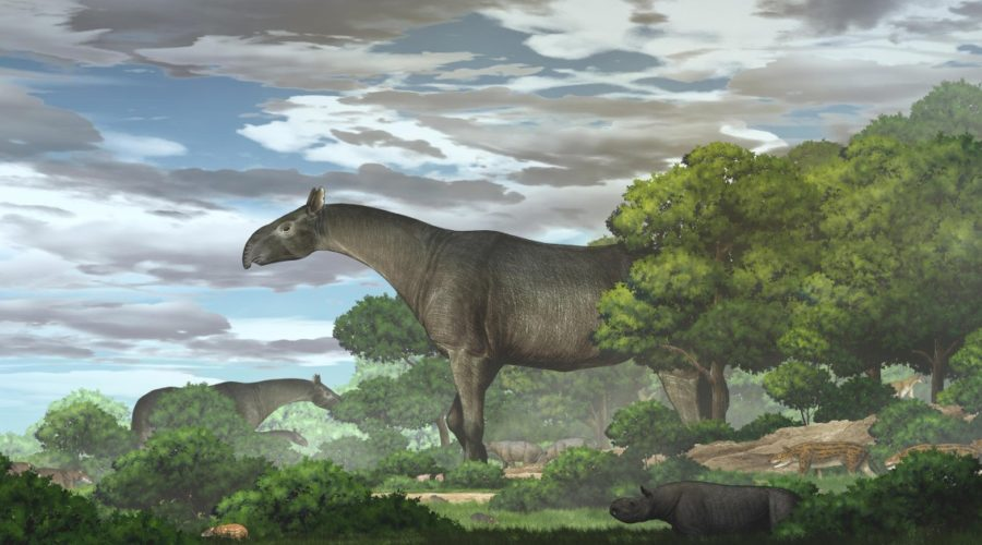 New giant rhino fossils - largest land mammals of all time - discovered in China