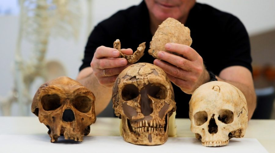 New primitive human found in 130,000-year-old fossils at Israeli cement site