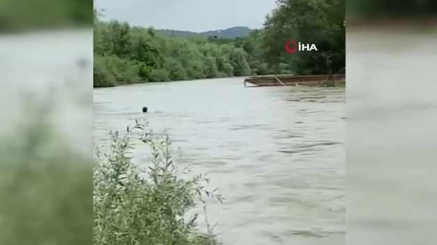 Halal got lost in the river, it entered willingly! These moments are filmed