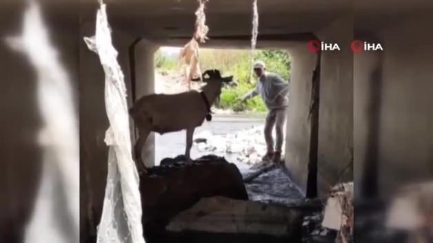 Turkish cowboy tried to catch escaped victim like this